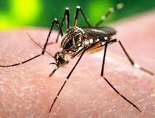 डेंगू पर दीवाली के बाद निगम करेगा चोट, खरीदेगा फॉगिंग मशीन